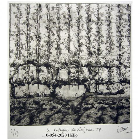 110-054-Le Potager du Roi, vue 54(héliogravure)