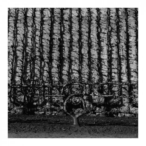 110-10-Le Potager du Roi, vue 10