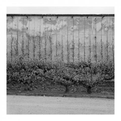 110-11-Le Potager du Roi, vue 11