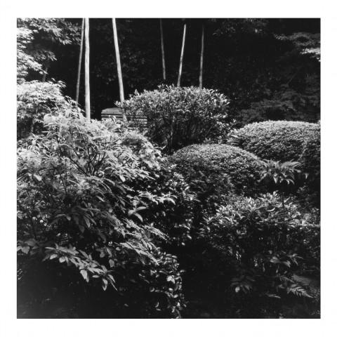 Ryoanji vue2. Kyoto 2000